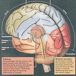 Hvorfor meditere? Meditation påvirker krop og hjerne
