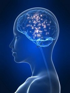 meditation-hjerne